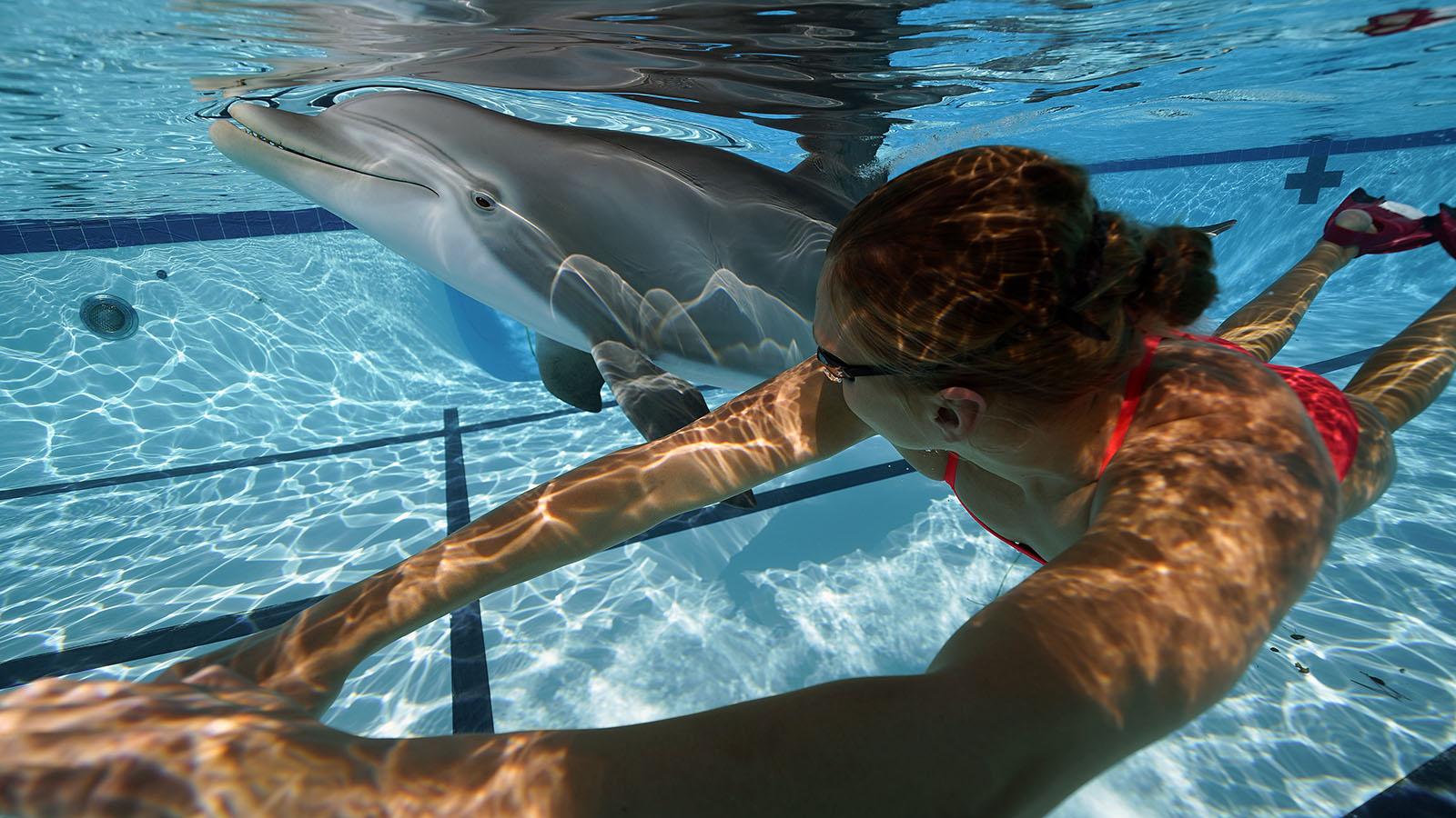 643970cc 7b34 4618 a621 f9f6cc2acd90 swim dsc0271 lauren dolphin fl small