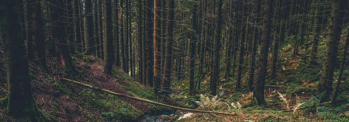 Small skogen 2560x900