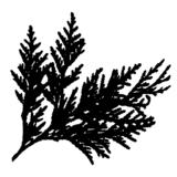 Small cedarsprig