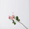 Small lydia rose profile