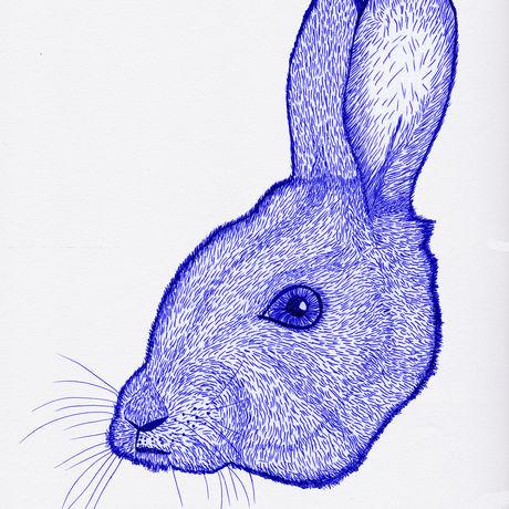 Rabbit blue rigostudio