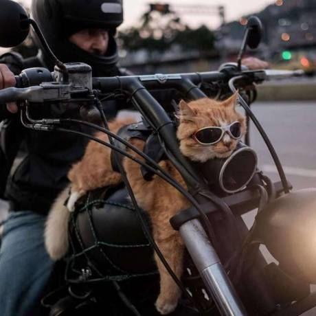Ko ka na motorce