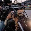 Small ko ka na motorce
