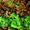 Small salat