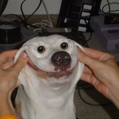 16675 happy dog is happy f
