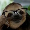 Small slothmike