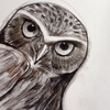 Small owl drawing