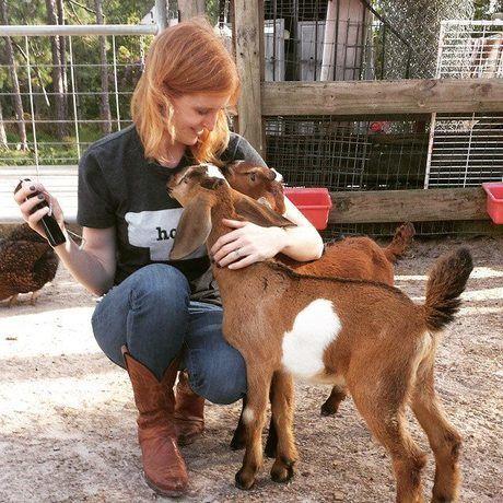 Libby goats