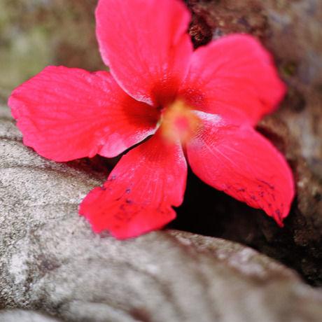 Onepinkflower