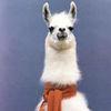 Small llama