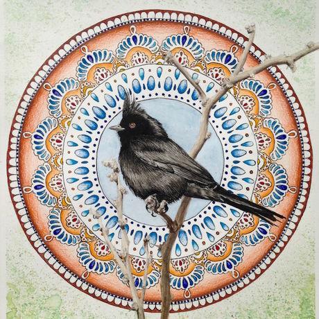 Bird mandala phainopepla fb image
