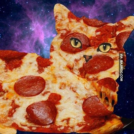 Pizza cat funny