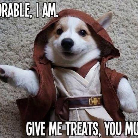 Starwars dog