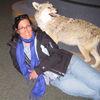 Small coyote lynn
