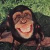 Small smiling monkey