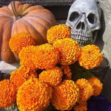 Dia de los muertos marigolds