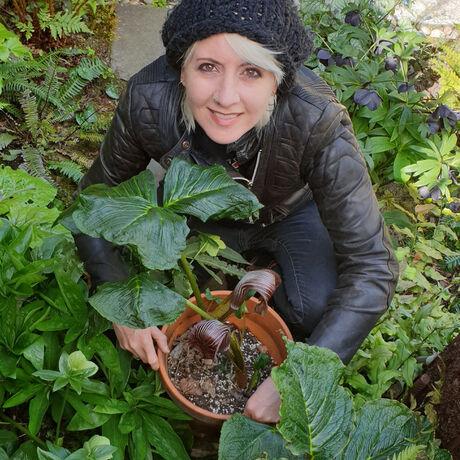 Mhazlewood in the garden with ariseama griffithii